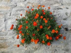 Fiore Arancione Photogallery img